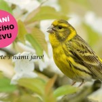 Banner_Vitani_2018-FINAL_text_II-1920x1080-800x450